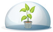 A plant in a pot inside a transparent dome