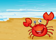 A Crab At The Seashore