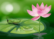 A grasshopper above a waterlily beside a pink flower