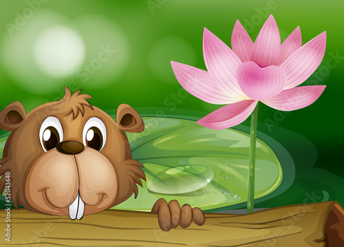 A beaver beside a pink flower