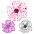 vector hand drawing pink flower