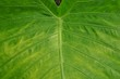 PLANT veins of a leaf 葉脈