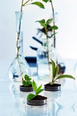 Experimenting with flora in laboratory.