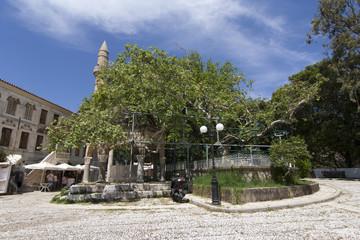 Albero di Ippocrate - Kos, Grecia