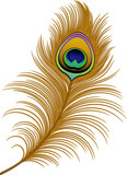Fototapety Peacock Feather