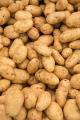 Macro view of fresh potatos