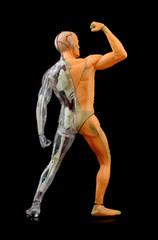 human body back