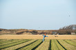 Scarecrow in agriculture field