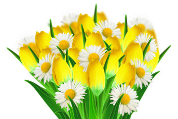Bouquet of daisies and tulips
