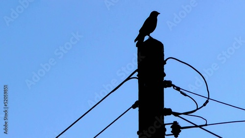 Bird on Telegraph Pole - Silhouette