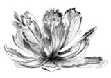 sketch flower single - 52061698