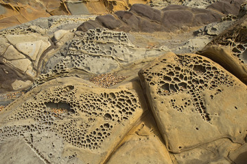 Pebble beach tafoni formations at Bean Hollow State Beach in Cal