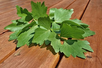 lovage leaves on wooden background