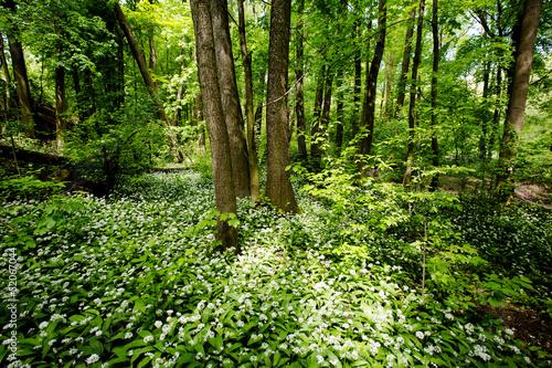 canvas print picture Wald mit Bärlauch