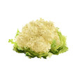 cauliflower of blots vector illustration