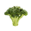 Broccoli head of blots vector illustration