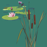 blossoming lotuses on a bog - 52068629