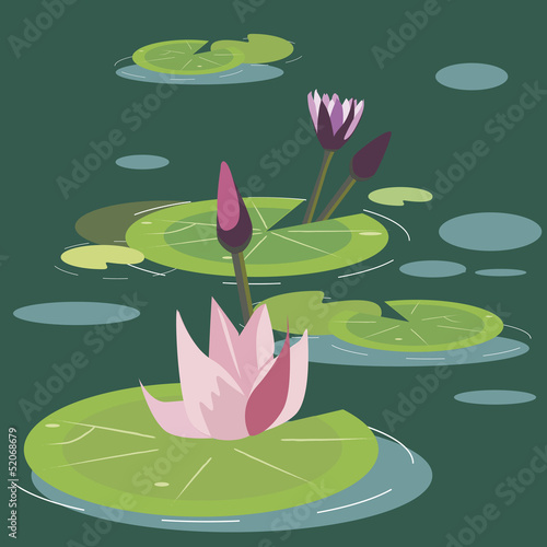 blossoming lotuses on a bog