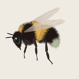 realistic bumblebee vector illustration