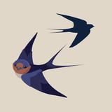 little swallow bird vector illustration - 52069217