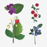 collection of realistic forest flowers and ripe berries - 52069254