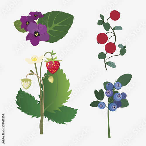 collection of realistic forest flowers and ripe berries