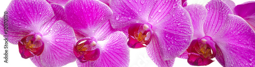 canvas print picture Orchidee Blume
