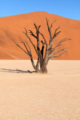 Dead vlei tree in Namibia