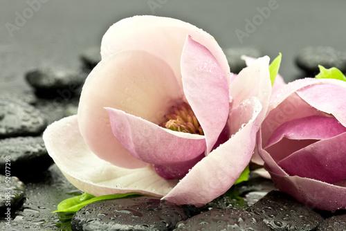 Magnolie z kamieniami do spa © CUKMEN