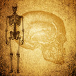 cursory drawing human skeleton on grunge texture background