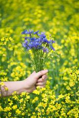 Hand holding bluebottles