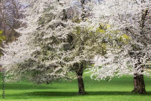 Fototapeten,schön,schönheit,blühen,blooming