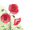 Watercolor background with poppy flowers