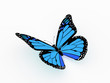 Butterfly blue color isolated