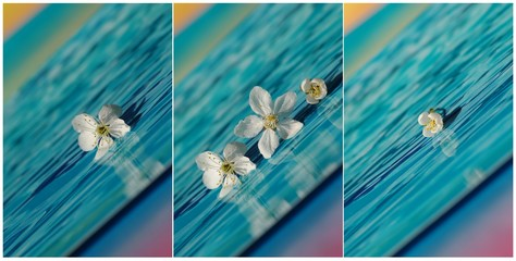 collage with white flower in blue
