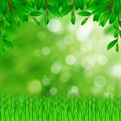 Green leaves and grass