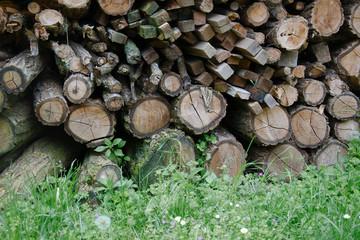 tronchi d'albero