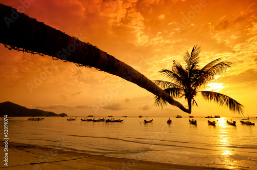 Sunset with palm and boats on tropical beach - 52091074