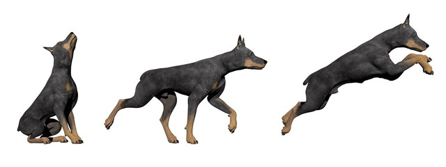 Doberman dog - 3D render