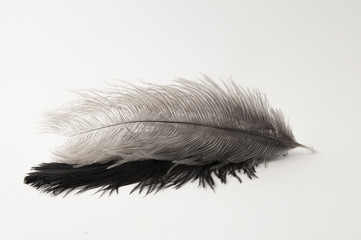 Dos plumas de avestruz