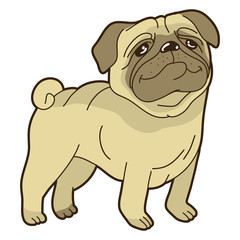 Vector funny cartoon pug