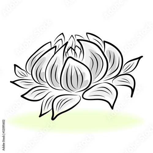 hand drawing water lily flower