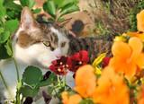 chat dans les fleurs