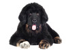 adorable tibetan mastiff puppy