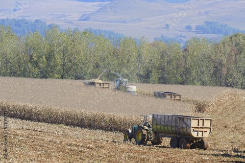 THRESHING MAIZE