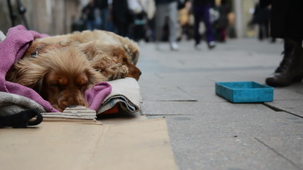 Homeless dog begging in crowded street