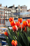 Amsterdam in tulips