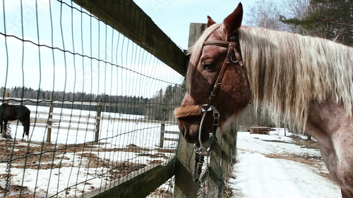 horse stands on the ranch