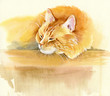 Quadro Animal Collection: Cat
