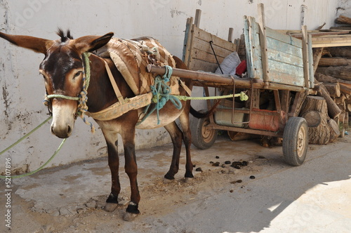 Papiers peints Ane Donkey of carriage, the market in Nabeul, Tunisia